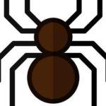 【ビル管理】クモは益虫? 害虫? 家で見かけたらどうする?